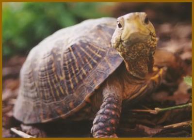 Por qué no corre la tortuga.